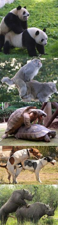 dia dos namorados animais fazendo sexo