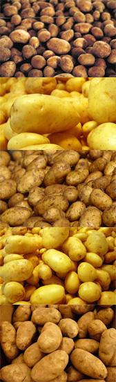 Uma porrada de batatas